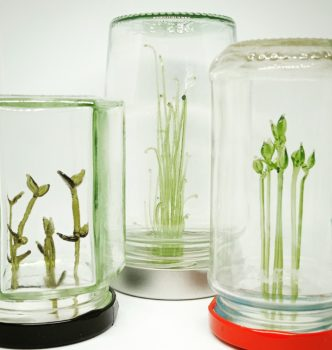 Small glass plants growing inside upturned glass jars of various sizes